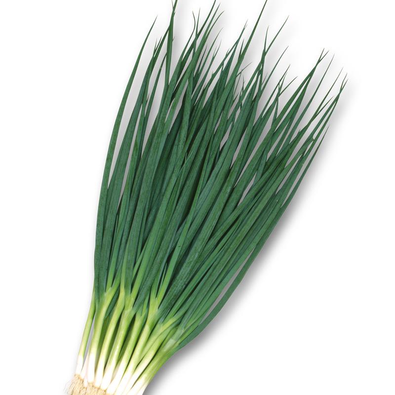 Детские картинки зеленый лук