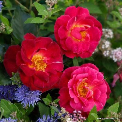 Ile de Fleurs