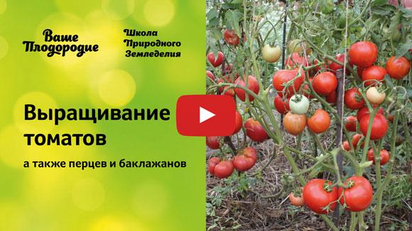 оптимальные условия для выращивания томатов термобелья заметно отличается