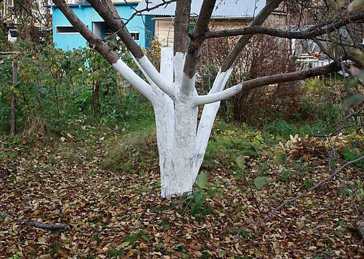 Листва под деревьями. Садовая краска для коры деревьев.