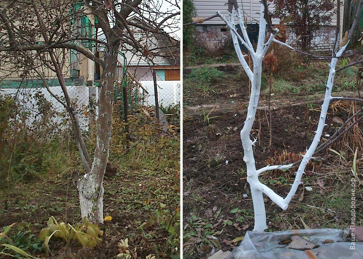 защита плодовых деревьев на зиму